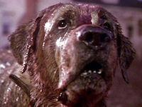 Worst Pet Movie Cujo