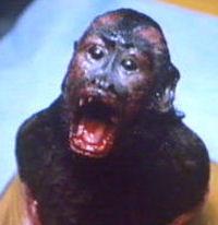 Ella - Monkey Shines - Worst Pet