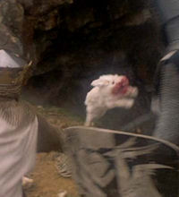 The Killer Rabbit Movie Pet