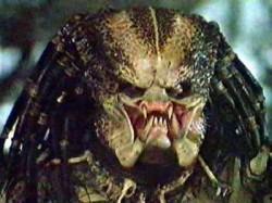predator-alien